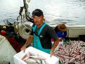 よか魚ドットコム 産直 鮮魚